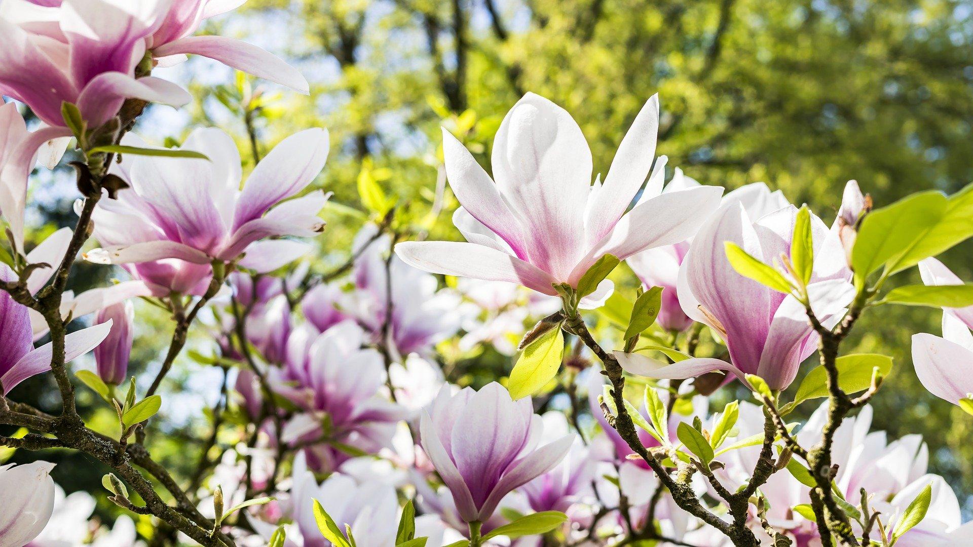 summer-garden-pink-flowers