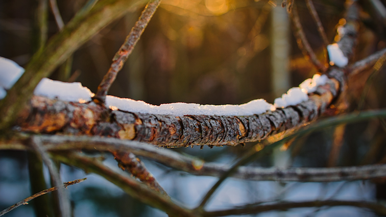WINTER-TREE-PRUNING-SNOW-COVERED-BRANCH