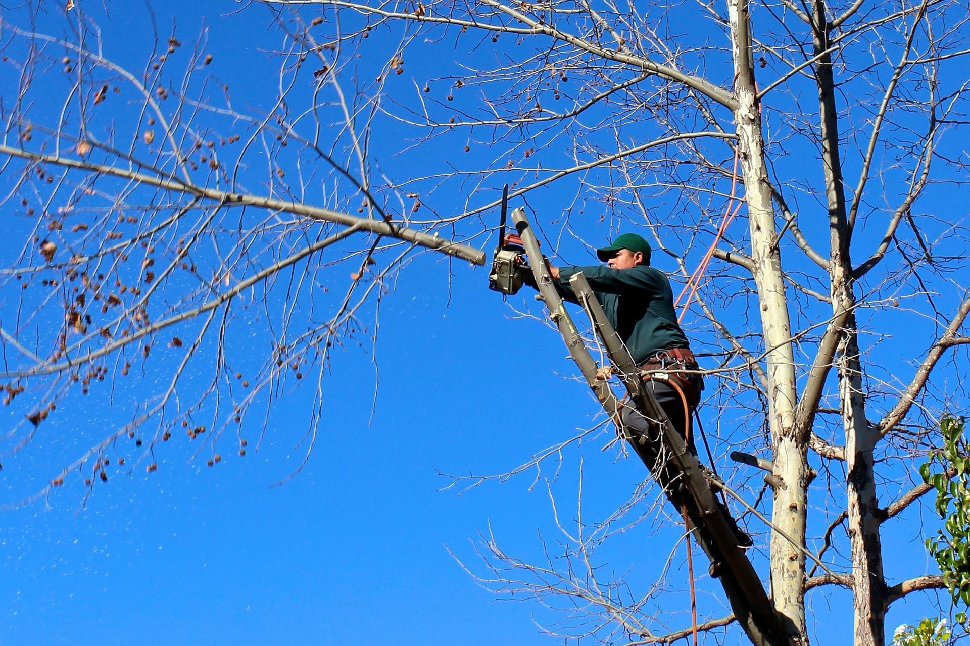 man-cutting-tree-branch
