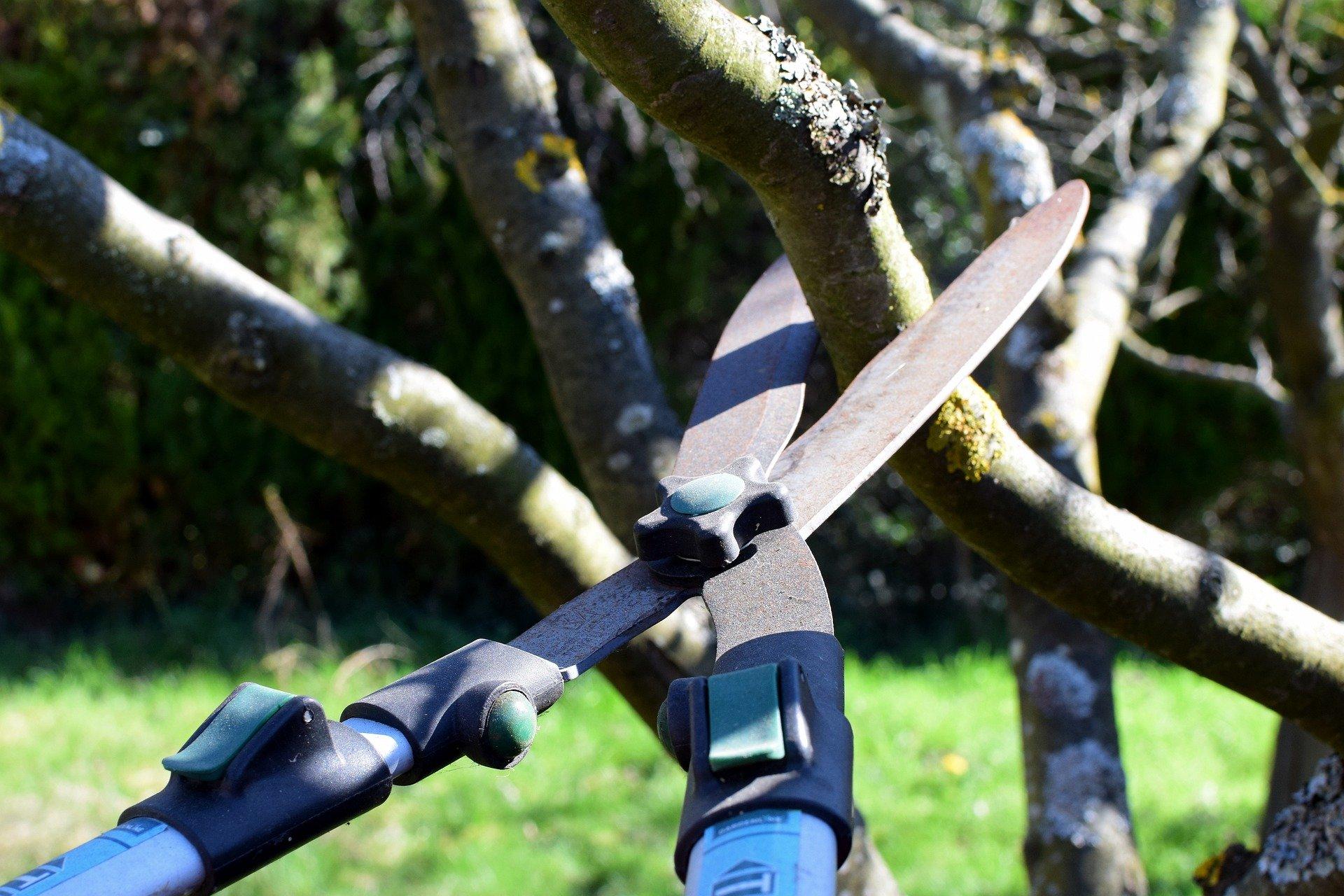 pruning-shears-pruning-tree-branch.jpg