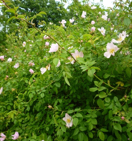 Hedge Trimming Block