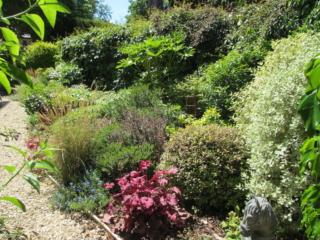 Mixed Shrub Planting