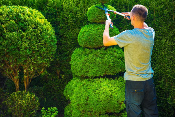 caring-for-hedges-man-trimming-hedge.