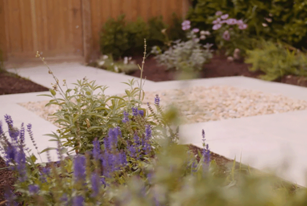 close-up-of-plants-in-landscaped-garden