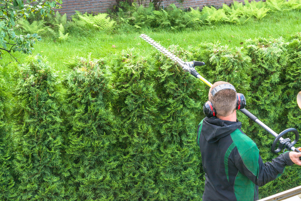 hedge-care-professional-gardener