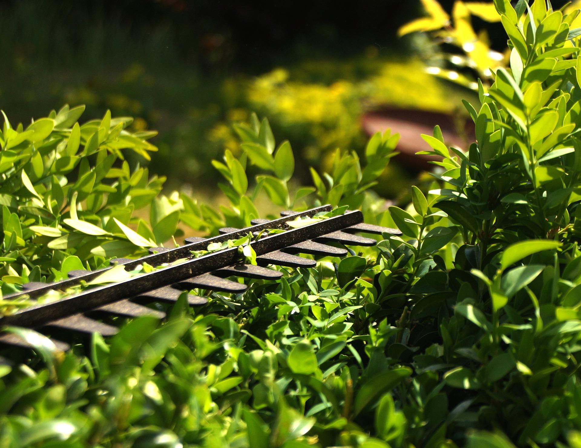 hedge-maintenance-hedge-cutting-blade