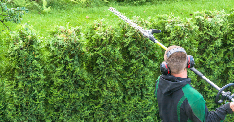 hedge-maintenance-man-with-trimmer