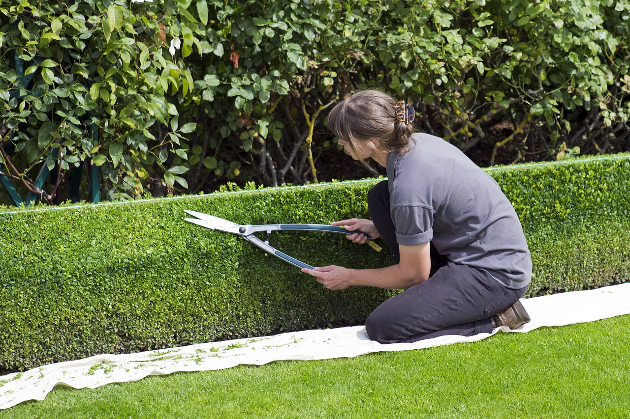 maintaining-beautiful-hedges-woman-using-string-as-guide