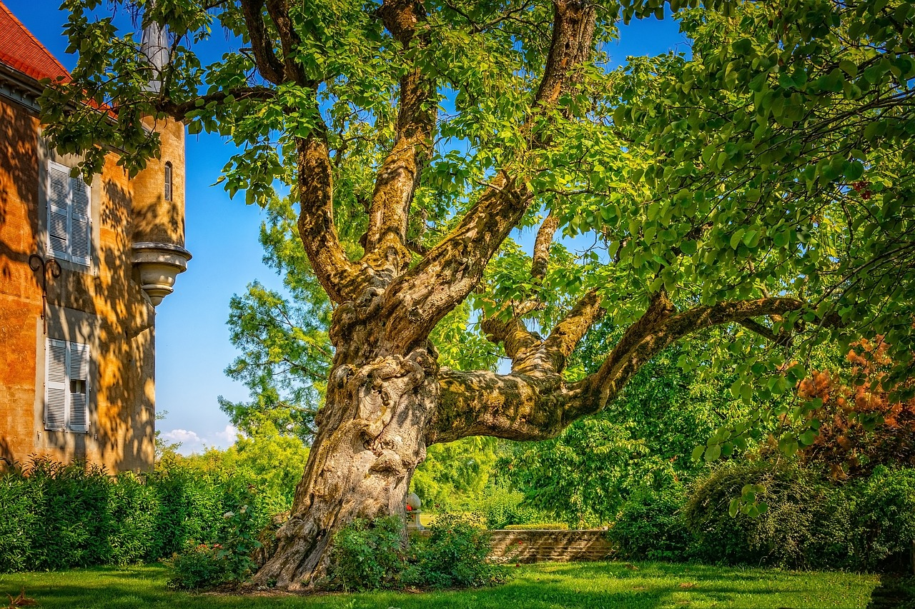 large-garden-tree