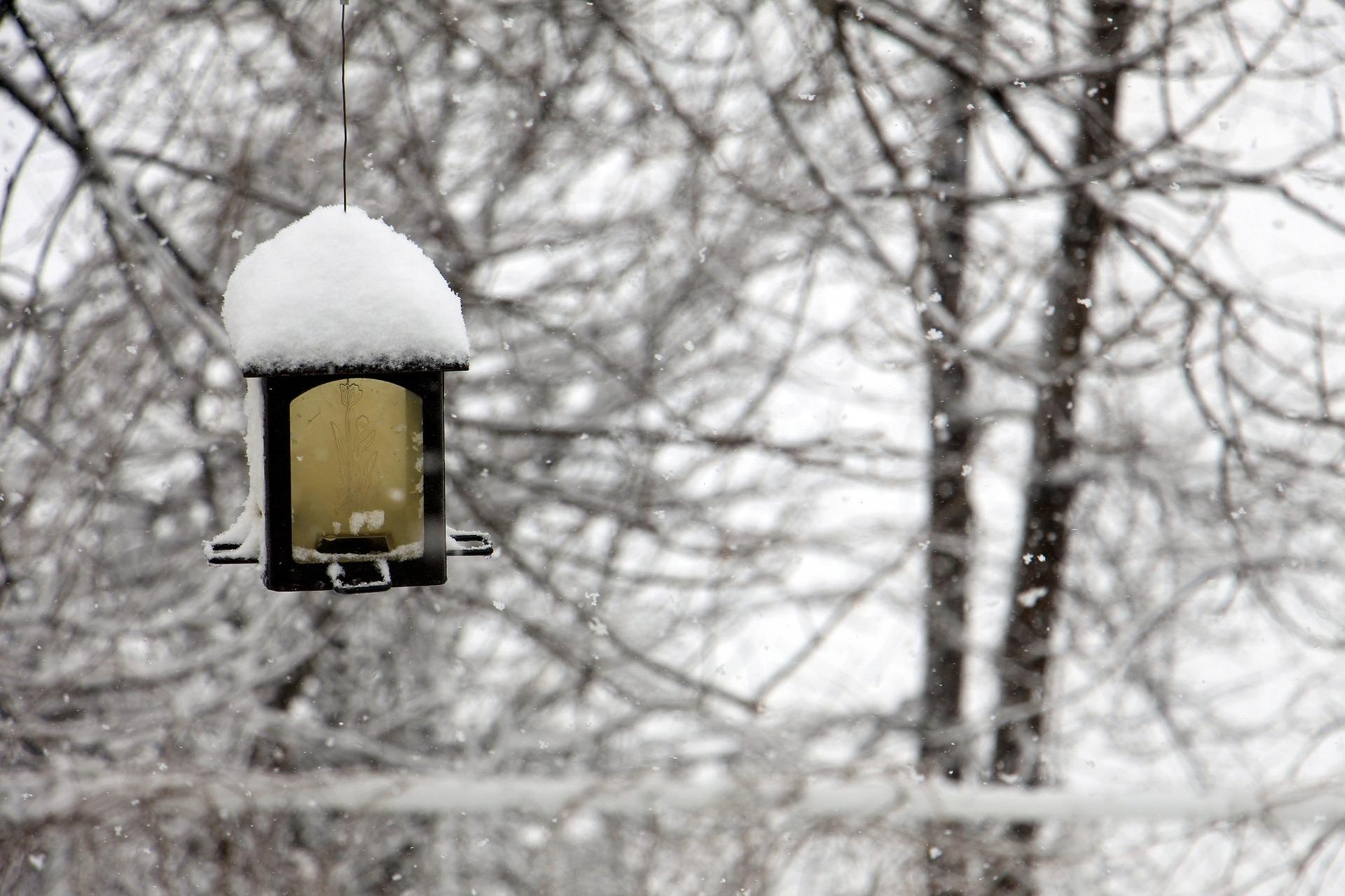 snow-covered-winter-garden