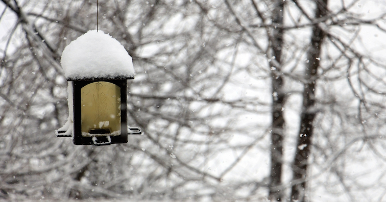 winter-gardening-snow-covered-lantern
