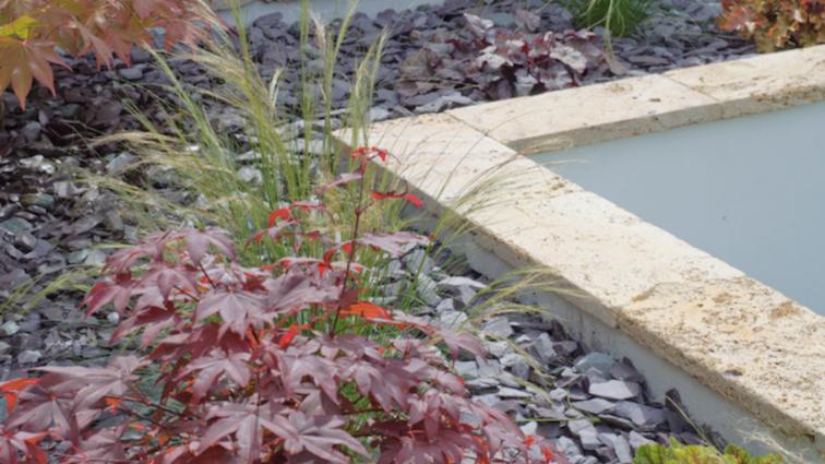 garden-plants-in-raised-bed