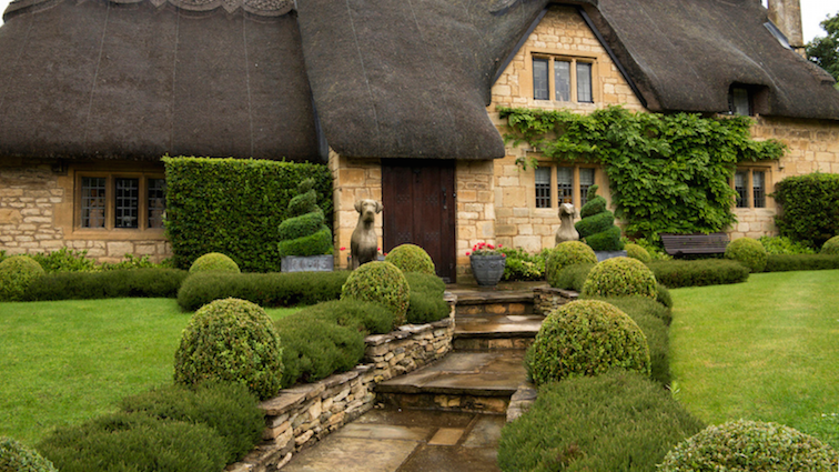 hedge-cutting-ideas-featured
